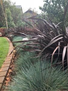 Sbahlescapes-projects---House-dasilva-landscape-plants